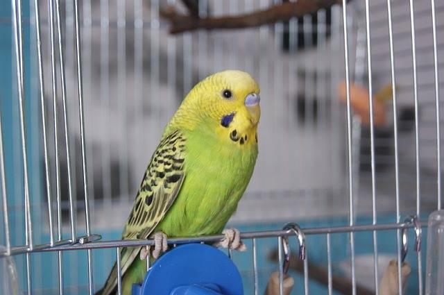 peluang usaha rumahan - jual beli burung A